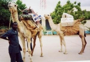Dimenticate i pony express: per spostare i libri nel deserto molto meglio affidarsi ai cammelli, come sanno perfettamente i responsabili della Kenya National Library Service, che si affidano a nove esemplari di sesso maschile per recapitare i volumi in prestito.