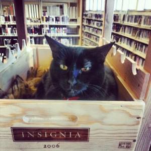 Elsie è la Regina della biblioteca pubblica di St. Helena, in California. Ha una pagina Facebook a lei dedicata e una storia alle spalle: è stata adottata dalla biblioteca nel 2012, quando la sua famiglia perse la casa. Da allora vive felicemente fra i libri.
