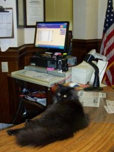 Stacks è stato adottato dalla biblioteca di Litchfield, Illinois, nel 2009. Da quando c'è lui non si vedono più topi. Ama sedersi sopra i computer o nelle immediate vicinanze.